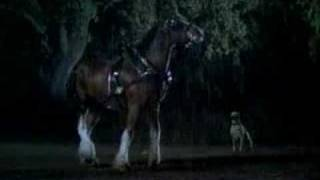 Budweiser 2008 super bowl commercial clydesdale training ispot aloadofball Gallery